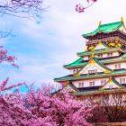 Excursiones desde Osaka